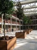Sevilla Hartholz Pflanzgefäße (weitere Größen)
